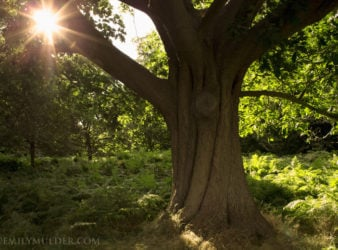Idyll Feature Richmond Park
