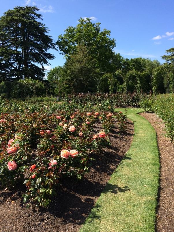 Formal Gardens and Natural Habitat Coexist at Blenheim