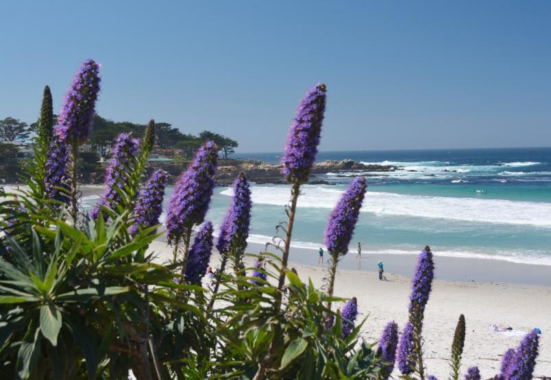 Carmel by the Sea Beach View Noreen Kompanik