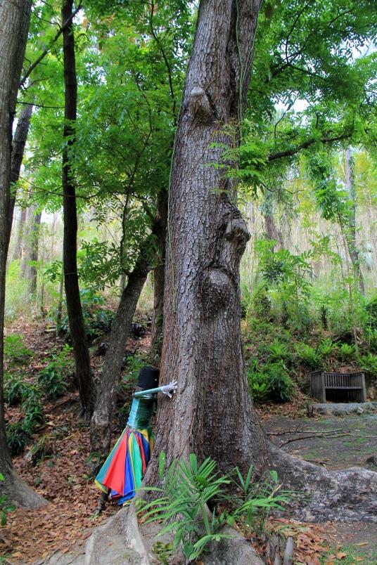 Sleeping Giant Tree
