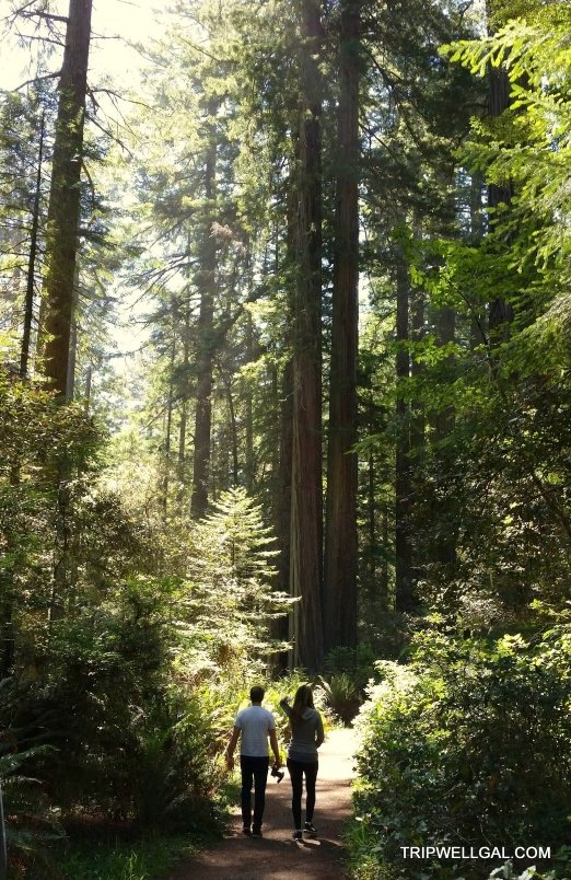Walking the Redwoods