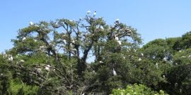 nesting birds in the Wading Bird Rookery