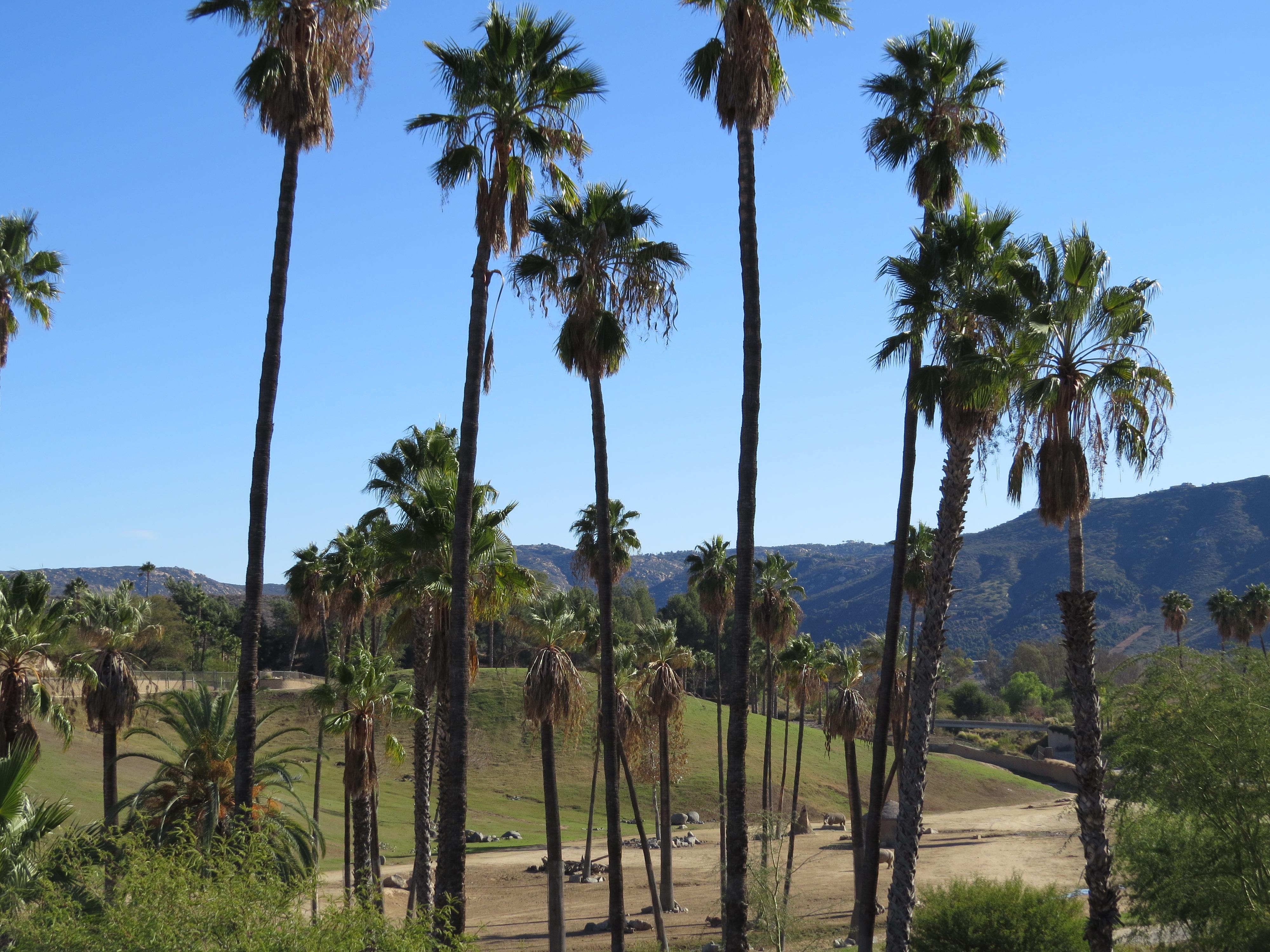 San Diego Zoo Safari Park Must-Visit