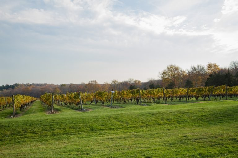 Stonington Vineyards on the Coastal Wine Trail