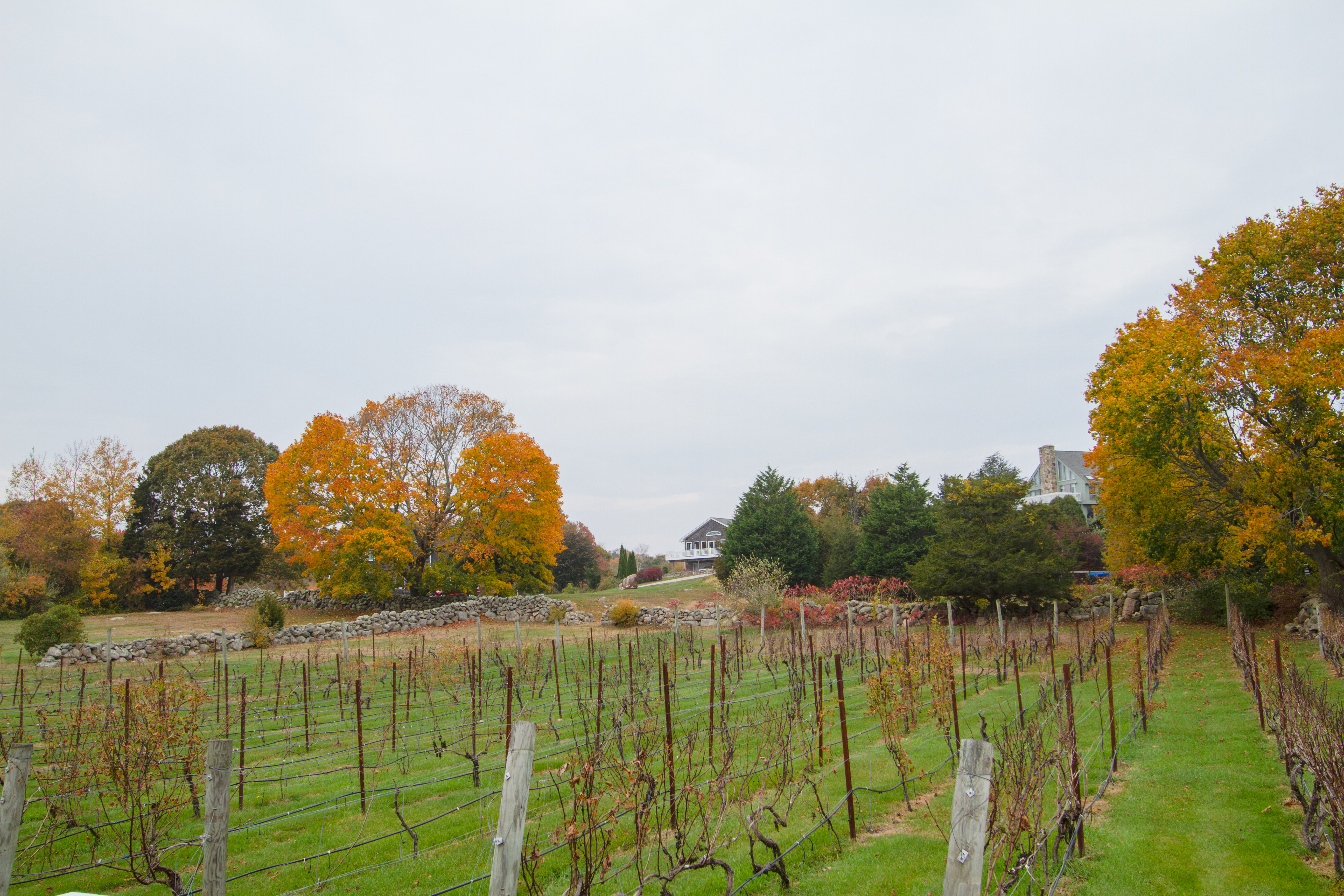 From the porch of Langworthy Farm Winery Tasting Room - The Coastal Wine Trail