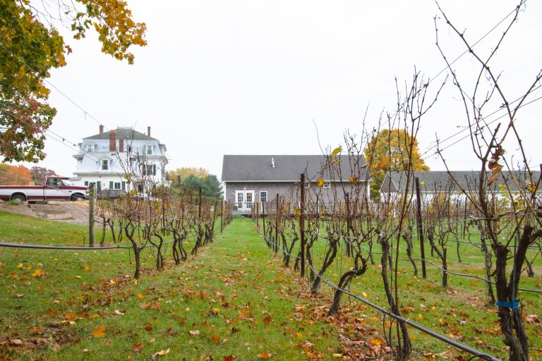 The Vineyard after harvest at Langworthy Farm Winery