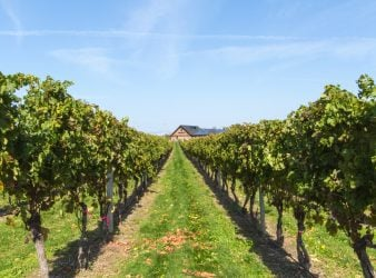 Newport Vineyards on The Coastal Wine Trail