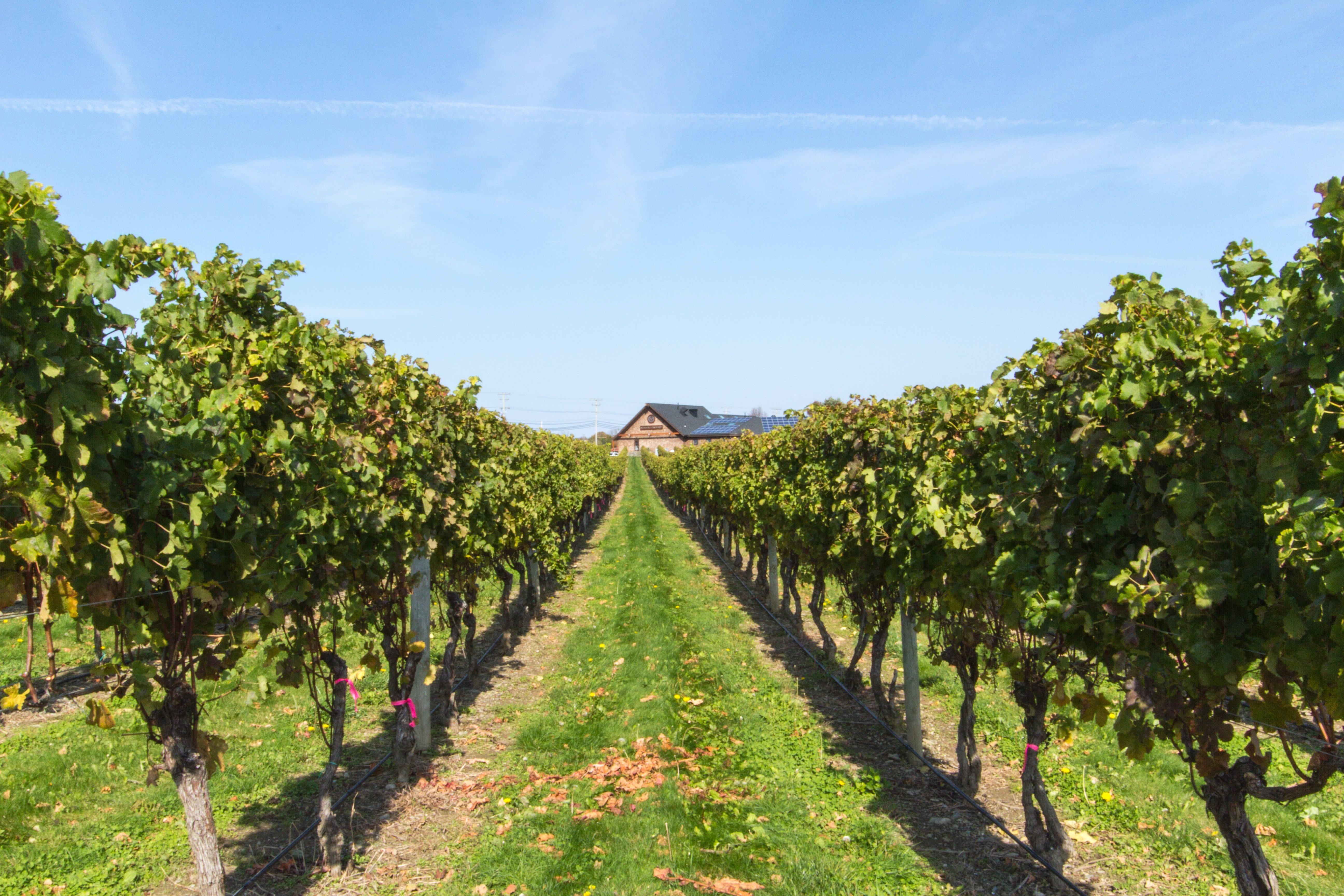 Newport Vineyards on The Coastal Wine Trail