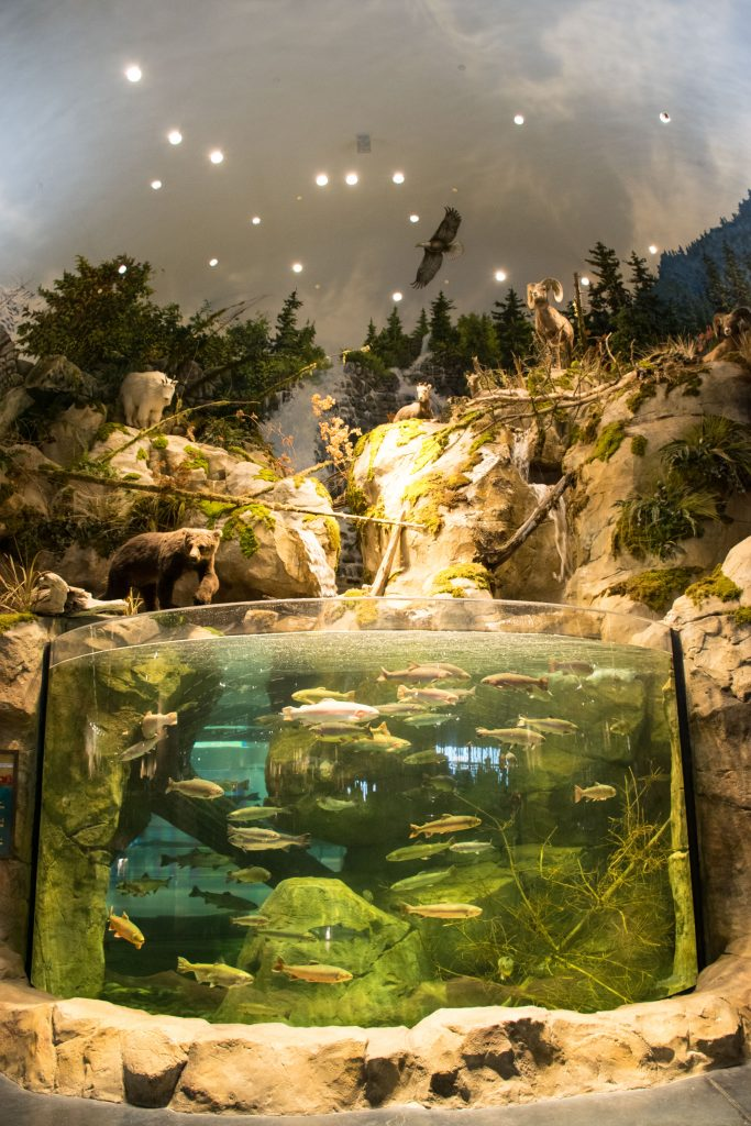 15,000 Gallon Fish Tank with Waterfall Bass Pro Store Tsawwassen Mills
