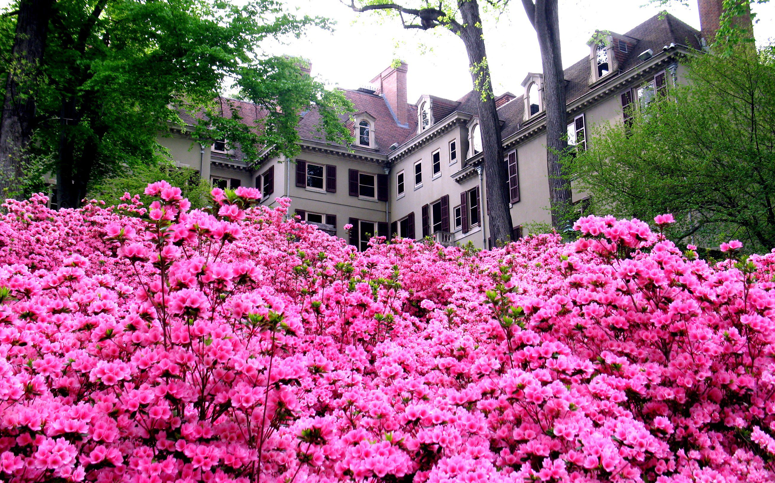 House with Blooms Winterthur Museum