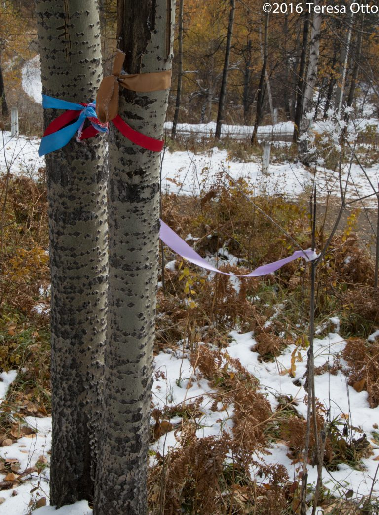 Prayer Ribbons on Birch Trees at Chersky Stone