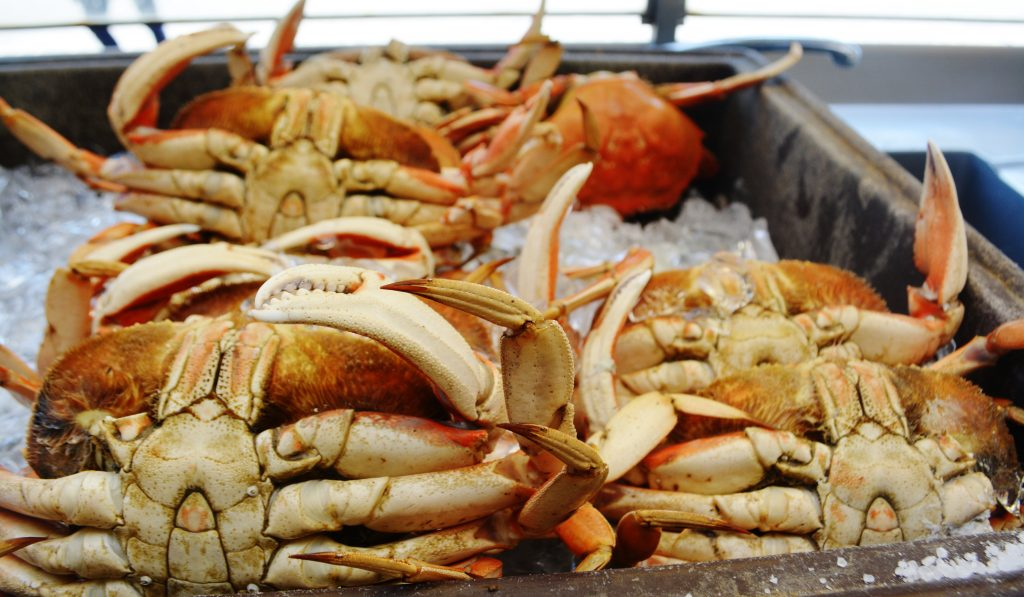 Dungeness Crabs Fisherman's Wharf San Francisco