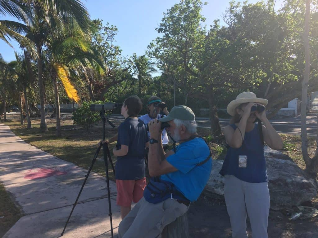 Birding on Nassau in Harbor