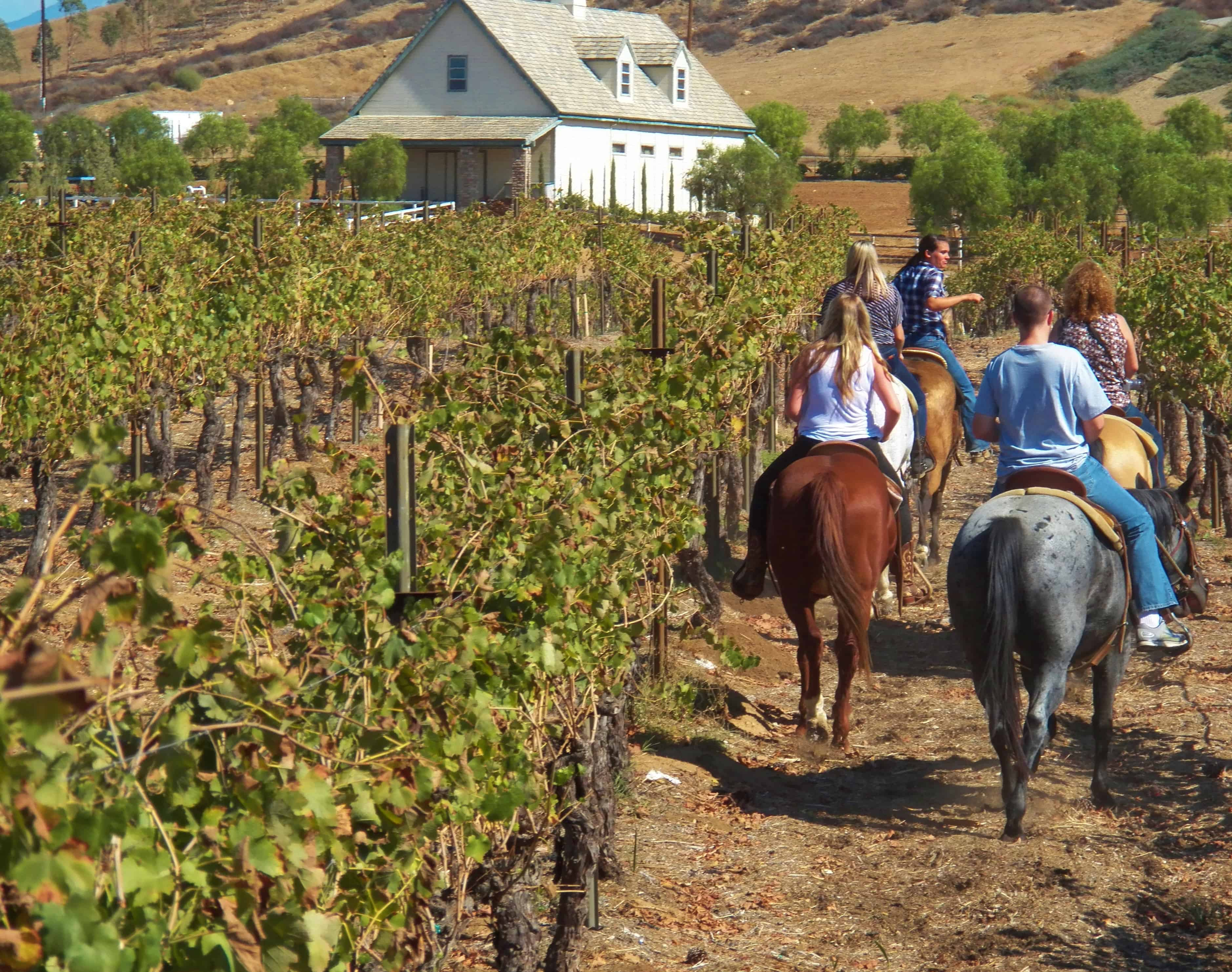 Horseback Riding Through the Temecula Vineyards