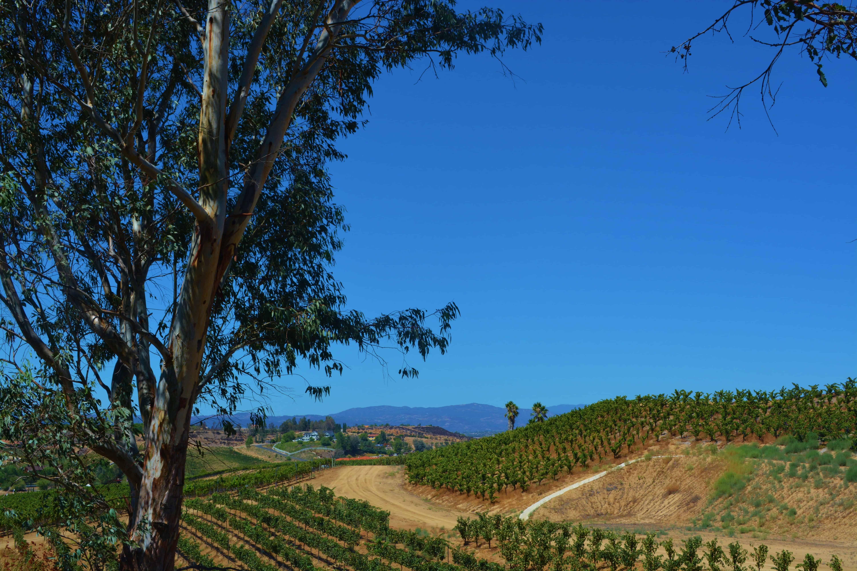 Vineyard Views from Falkner Winery