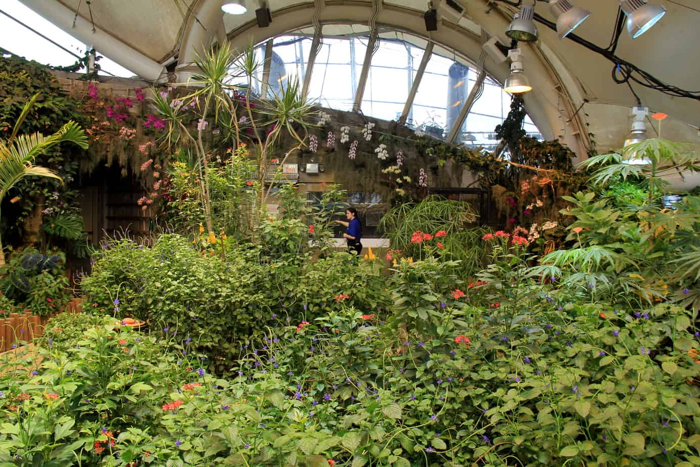 Dancing Wings Butterfly Garden Strong Museum