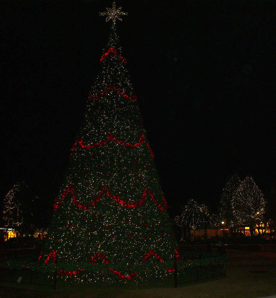 Market Street Tree
