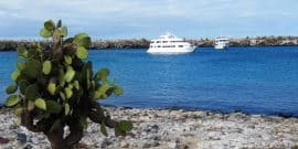Galapagos Islands Cruise Ships
