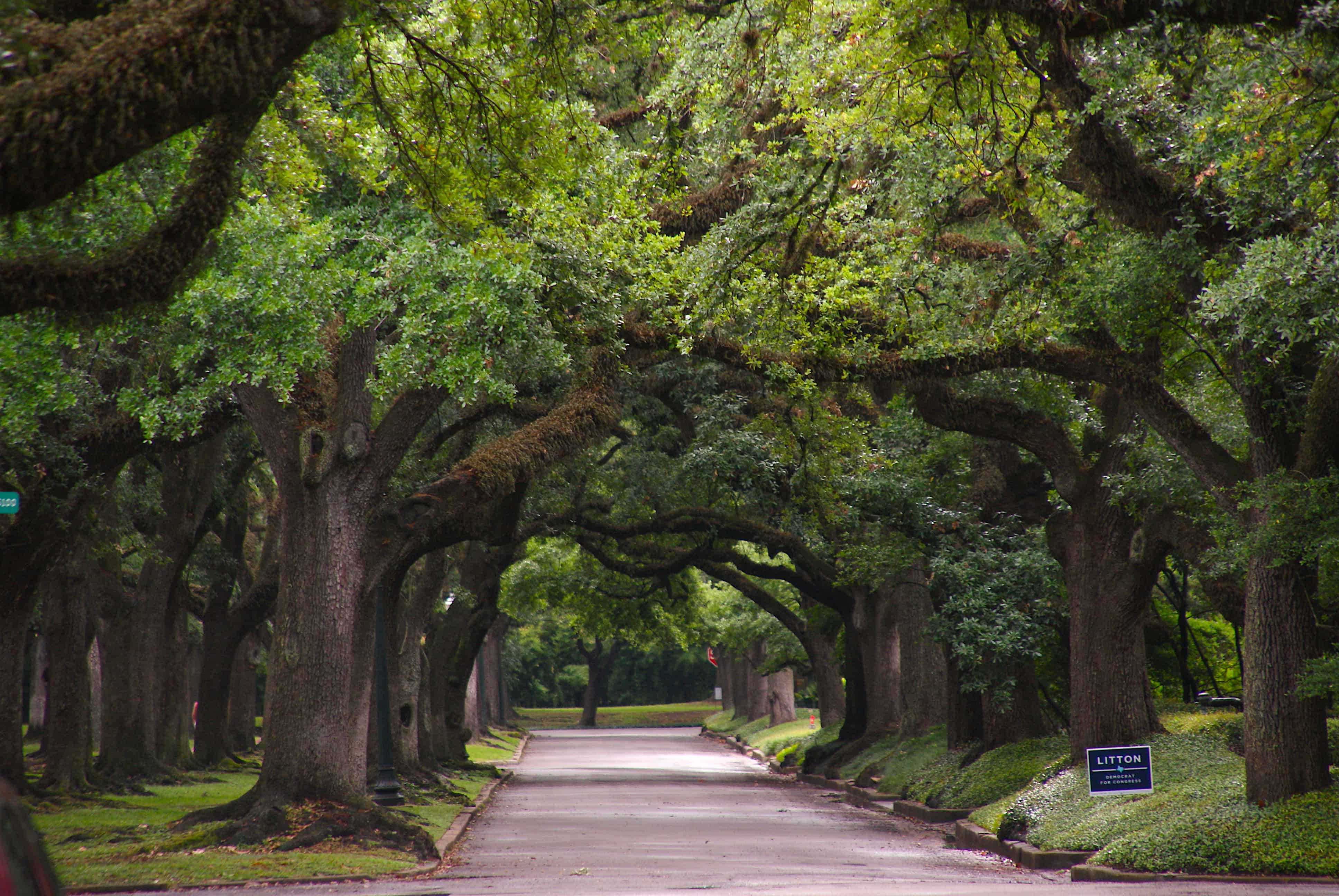 Houston Tree-Lined Street
