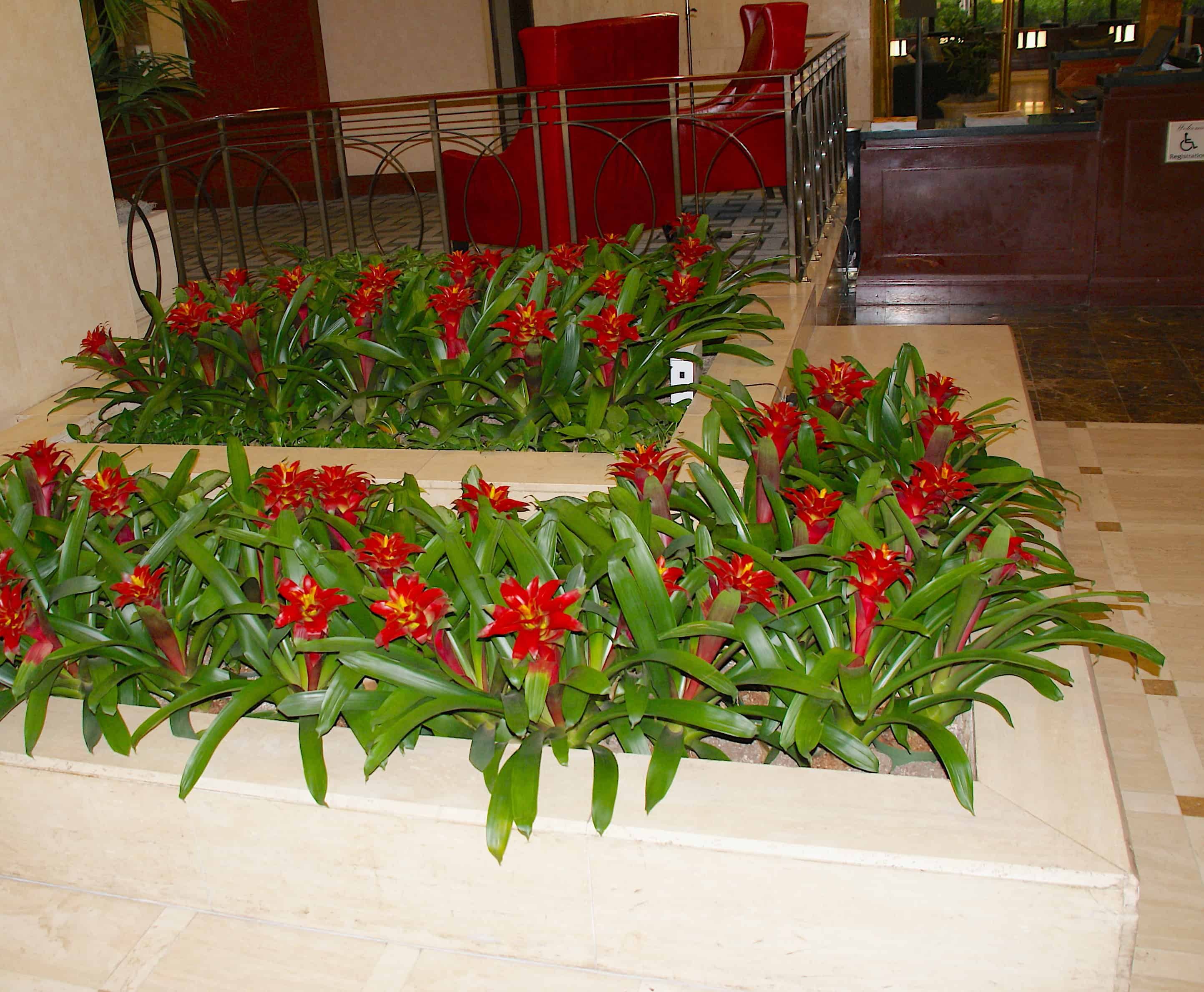 Lobby Flowers DoubleTree by Hilton Houston Downtown
