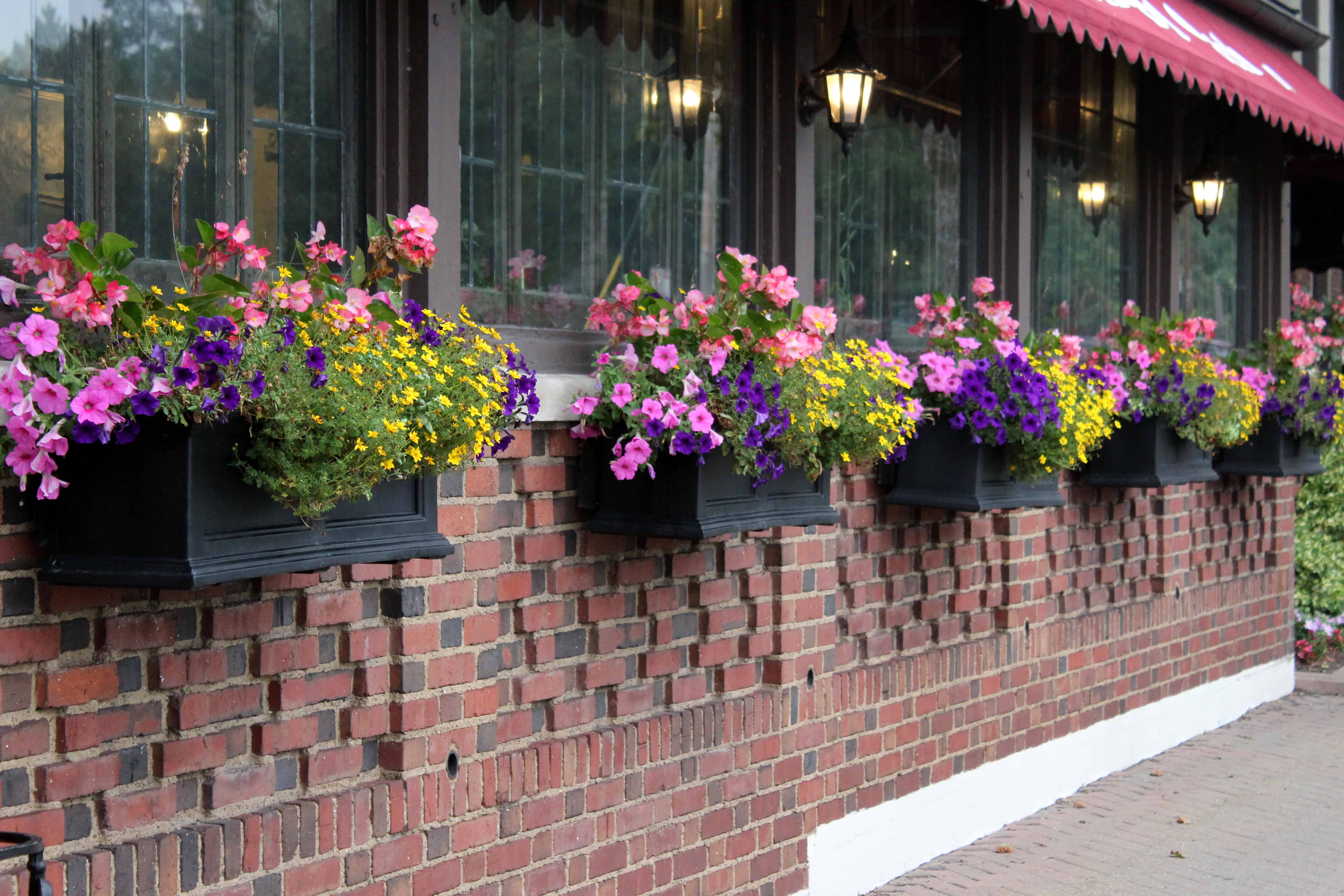 Flower Boxes at Niagara Falls Red Coach Inn